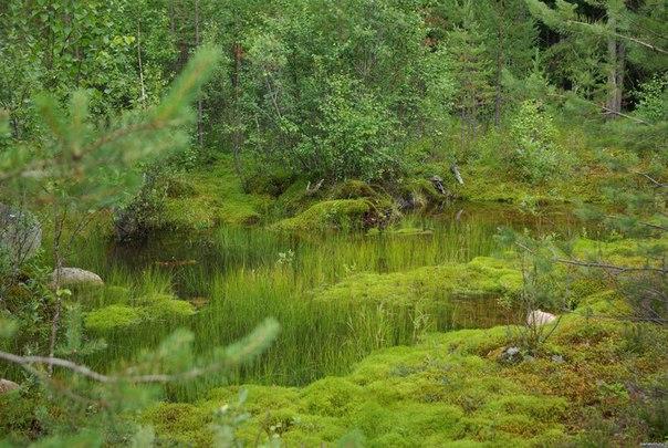 скачать болото торрент - фото 9