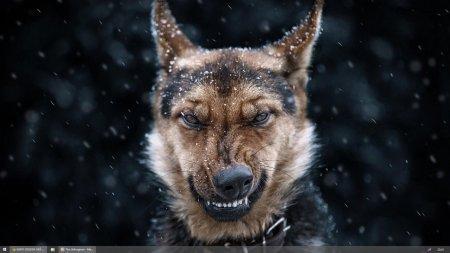 Бой против собаки