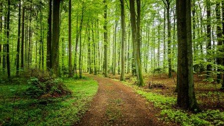 О деревьях которые помогут вам выжить